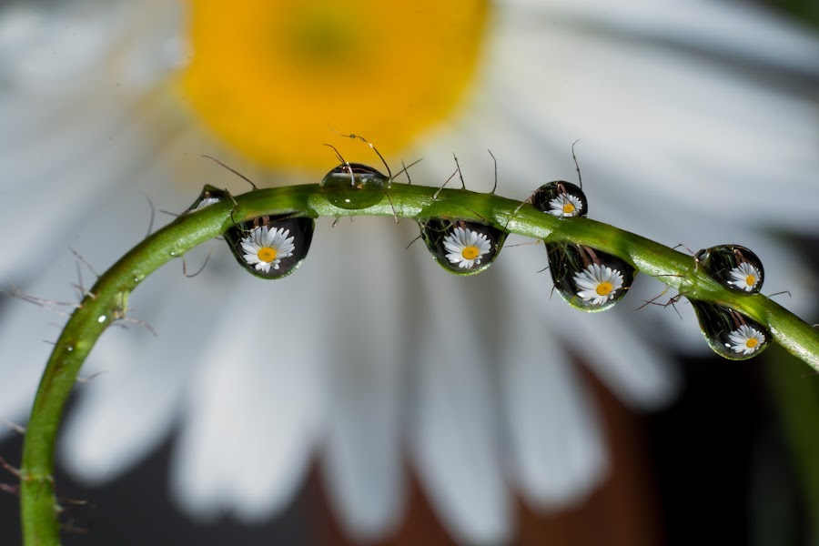 by Luca Arșinel - Nature Up Close Natural Waterdrops (  )