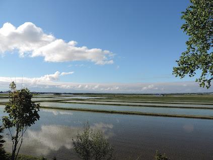 水入れの田に映る雲