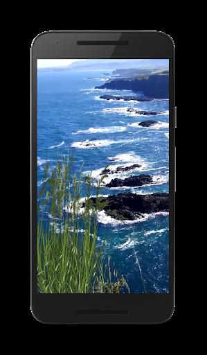 바다 비디오 벽지