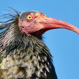 0 Bird 98164~ by Raphael RaCcoon - Animals Birds