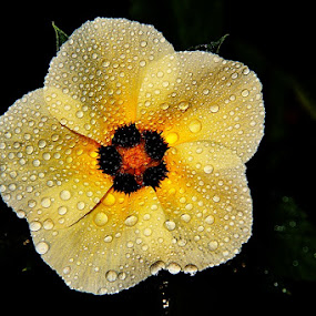 by Megarianti Megarianti - Nature Up Close Flowers - 2011-2013