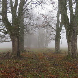 Foggy Time by Mārīte Ramša - Landscapes Weather (  )