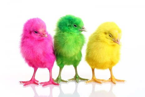 Chicks Wallpapers - náhled