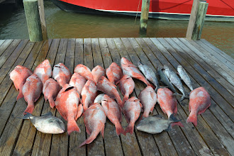 Photo: that's a lot of fish to behold
