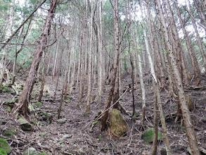 上部に林道が見える