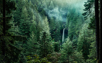 Photo: Look North  The North Falls of Silver Falls State Park as seen from the roadside viewpoint. It was early morning, the sun was just coming over the horizon and the low hanging clouds were blowing through the area. I almost didn't stop here but nature was calling so I spent a few minutes here enjoying the view. Thank goodness for too much coffee.  Prints available:http://smu.gs/1llIb81  #waterfalls  #silverfallsstatepark  #oregon