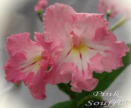 Photo: Pink Souffle