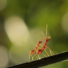 Dance together by RIO DJOENED - Animals Insects & Spiders