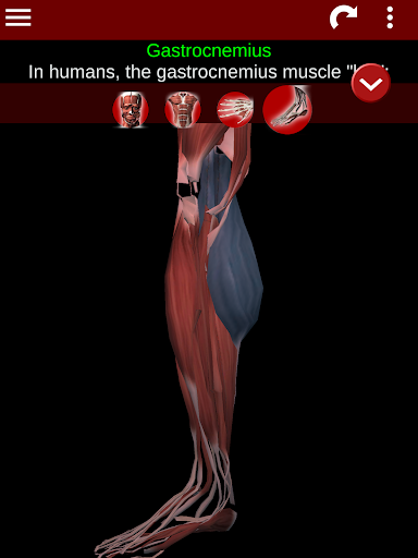 Muscular System 3D (anatomy) 2.0.8 Screenshots 20