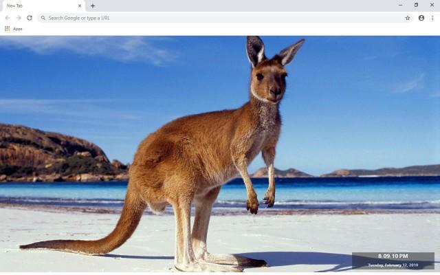 Kangaroo New Tab & Wallpapers Collection