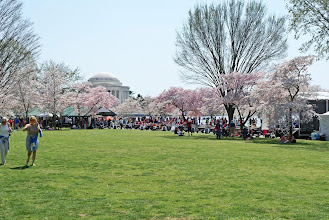Photo: People gathering among the cherry blossoms