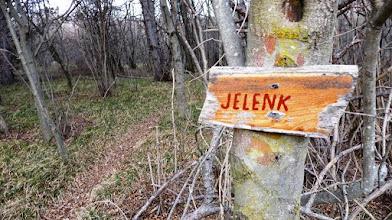 Photo: s kolovoza sem zavil desno v gozd na markirano pot
