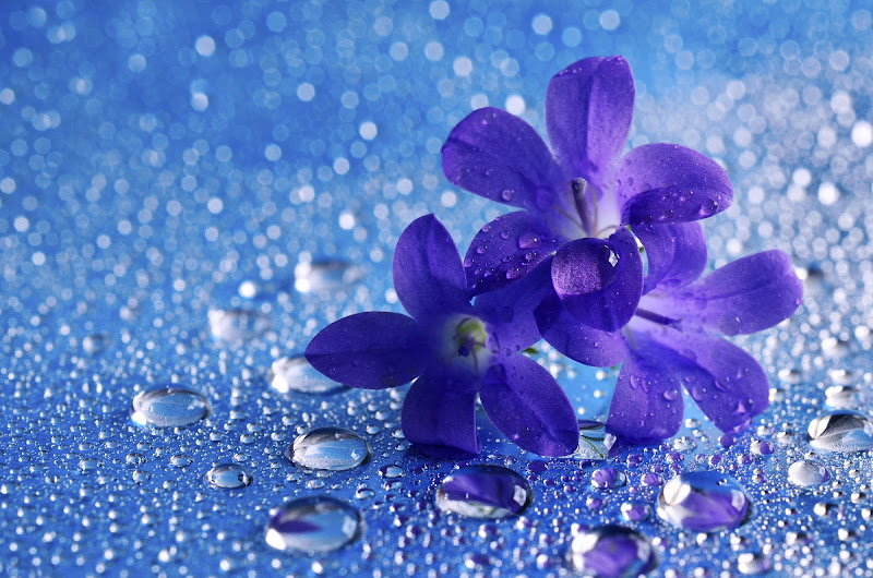 Blue flowers... di Licia Piazza