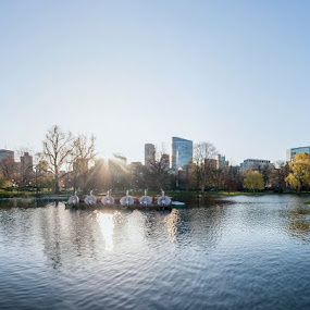by Daniel Olsen - City,  Street & Park  City Parks ( boston, park, sunrise, morning, pond, spring, panoramic )