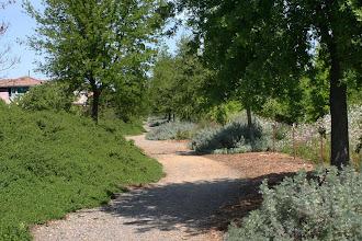 Photo: Macero Estates Greenbelt