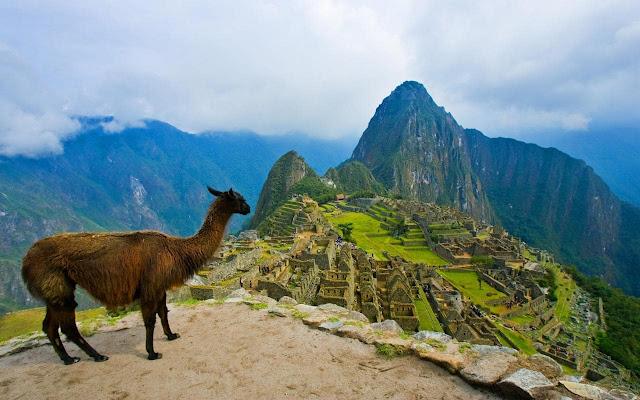 Llama New Tab