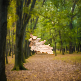 Autumn is coming... by Tiberiu Stefan  Simion - Nature Up Close Leaves & Grasses ( orange, tree, nature, autumn, green, leaf, yellow, woods )