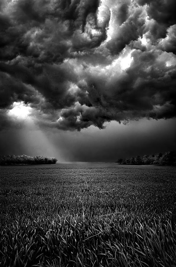 Skies of Anger by Phil Koch - Landscapes Weather ( summer. spring, vertical, photograph, environement, farmland, yellow, storm, leaves, love, nature, autumn, weather, flowers, black, orange, twilight, white, agriculture, black and white collection, horizon, pwcbwlandscapes, portrait, winter, national geographic, serene, floral, inspirational, wisconsin, natural light, phil koch, spring, sun, photography, farm, horizons, inspired, clouds, office, green, scenic, morning, field, red, seasons, blue, sunset, peace, fall, meadow, earth, sunrise, landscapes, , black and white, b&w, landscape )
