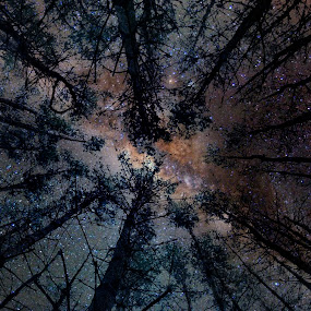 by T. Lee Kindy - Landscapes Starscapes