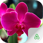 Orchids Guide icon