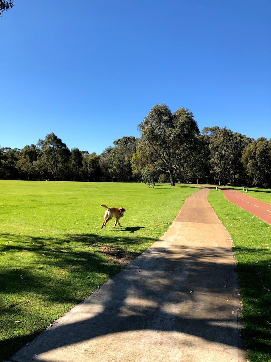 パース公園犬