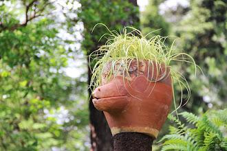 Photo: {1. Mimétisme ou imitation : l'avis des plantes} Les totémimiques