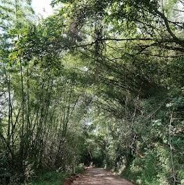 Nebenstraße durch den 'Dschungel'.