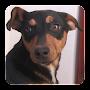 Download Dog Sounds apk