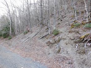 林道から奈良代山への道
