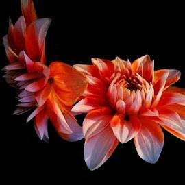 by Mainak Das - Flowers Tree Blossoms