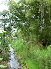 Photo: Yumbo river at Tulipe
