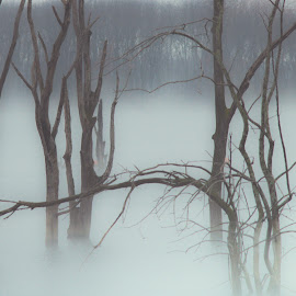 Fog by Jennifer  Loper  - Landscapes Waterscapes ( winter, leafless, trees, lake, fog )