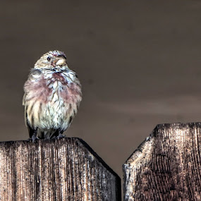 I managed to sneak up on this little bird and get his photo. by Debbie Duggar - Animals Birds (  )