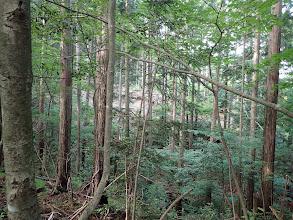 右手に林道が