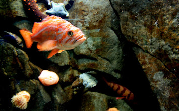 Photo: I wouldn't be surprised if the fish turned and talked. What do you think the fish would be saying? ;)