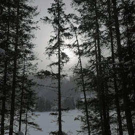 Mystischer Wald  by Helga Be - Landscapes Forests ( mystic forest )