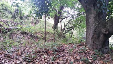 Photo: Native woodland