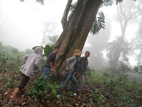 Photo: It is raining so hard. This tree is the only place we can find to seek shelter. We discuss whether we should continue the trip to see the oldest ancient trees on Youle Mountain. Our guides don't appear to be worried but privately they are concerned about our safety.