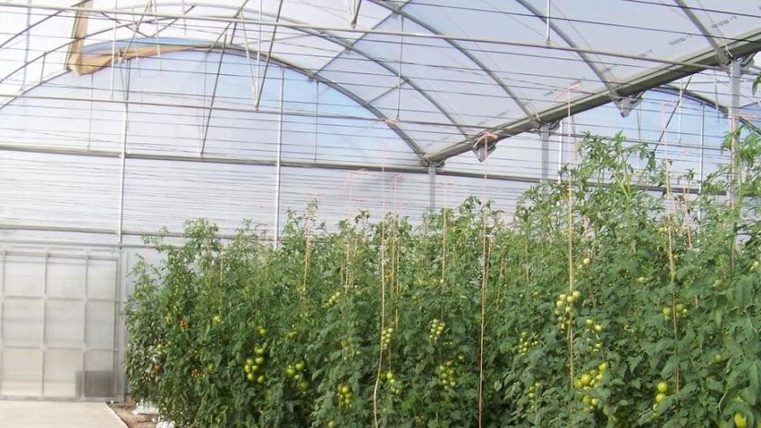 La Junta anuncia 40 millones para modernizar invernaderos