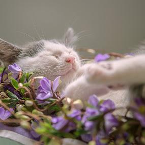 Wiscar 4 by Anita Meis - Animals - Cats Kittens ( kitten, newborn )