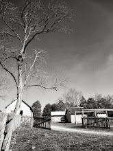 Photo: Black and white photo of a bare tree on a farm at Carriage Hill Metropark in Dayton, Ohio.
