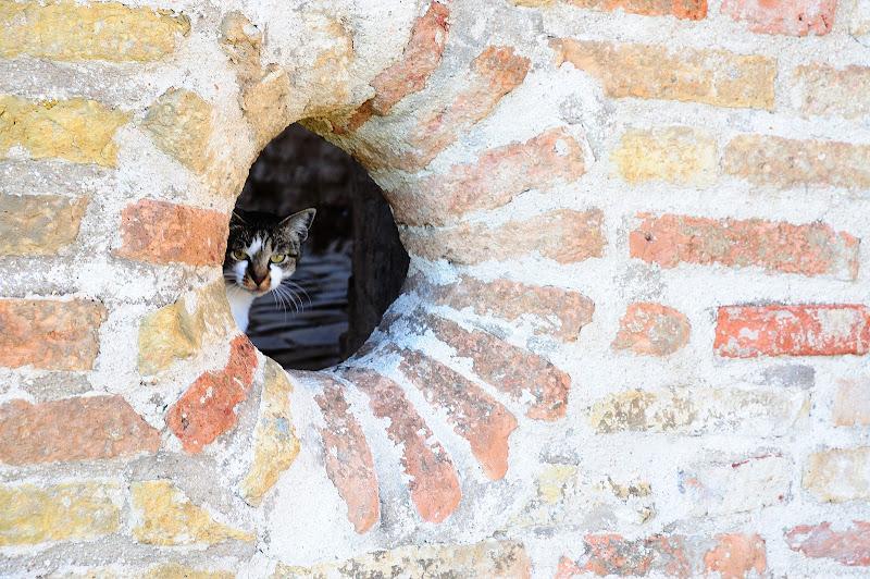 Uno sguardo al di qua del muro di cimarelli carlo