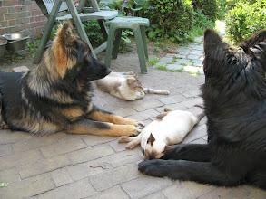 Photo: Wat moeten wij toch met deze katten?