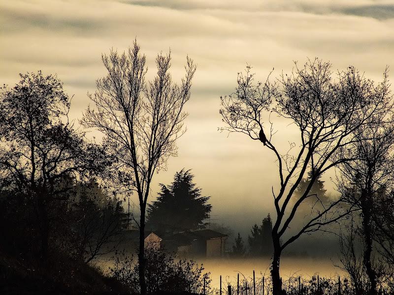 Ai confini della nebbia di Intelliverso