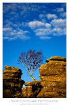 Photo: #TreeTuesday  Silver Birch, Brimham Rocks  This windswept little tree appeared to be clinging very carefully to the rocks, photographed here on a sunny afternoon as late autumn led into early winter. It's a well-known and well photographed tree locally, so it was nice to have the dappled cloud in the sky above the rocks to add something a little more transient to the image.  Can EOS 5D, 24-105mm at 105mm, ISO 50, 1/20s at f18