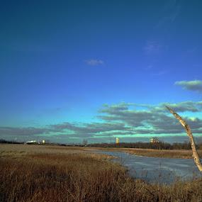 Lockport Prairie Preserve by Karen Carnahan - Landscapes Prairies, Meadows & Fields ( illinois, nature, prairie )