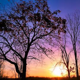 Rainbow Sunrise by Nancy Tonkin - Nature Up Close Trees & Bushes (  )