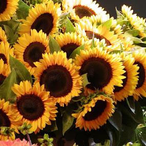 by Barbara Lokken - Flowers Flower Arangements