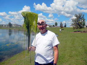 Photo: Bonita Pond on Canal Street, 1:12 pm, Filamentous Algae
