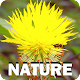 Nature Download for PC Windows 10/8/7